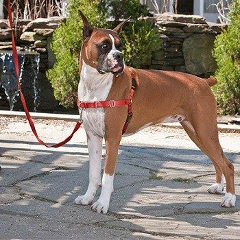 Easy-Walk PetSafe Rojo