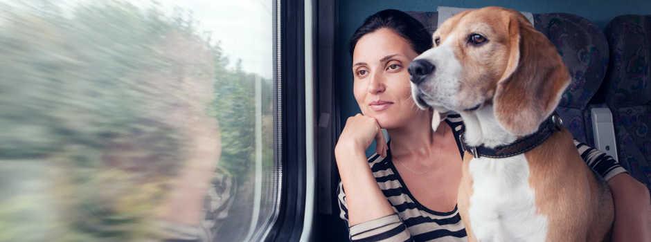 viajar en tren con perro gosygat - blog