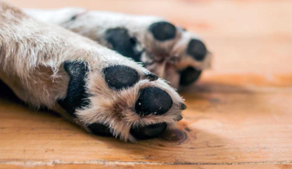 Las almohadillas de los perros - consejos y cuidados - blog - gosygat