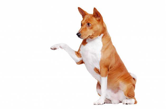 blog - gosygat - perros