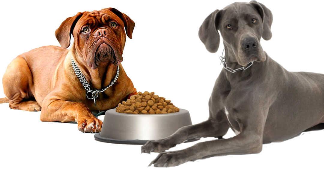 ¿Qué pienso compro a mi perro? blog-gosygat