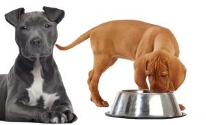 elegir pienso para mi perro blog -gosygat